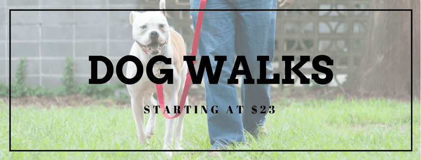 Dog Walking in San Diego