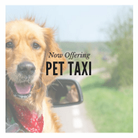 Pet Taxi to Groomer or Vet San Diego BeLoved Pet Sitting