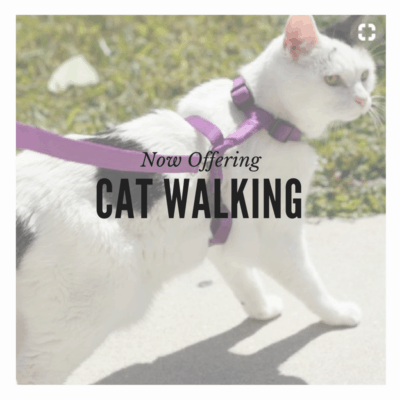 Cat Sitting Cat Walking On Leash San Diego Cat Sitter