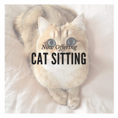 Pet Sitting Cat Sitting Cat Care San Diego