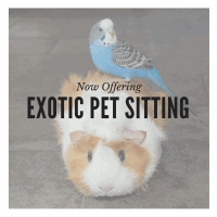 Hamster and Bird Pet Sitting San Diego Exotic Pet Care