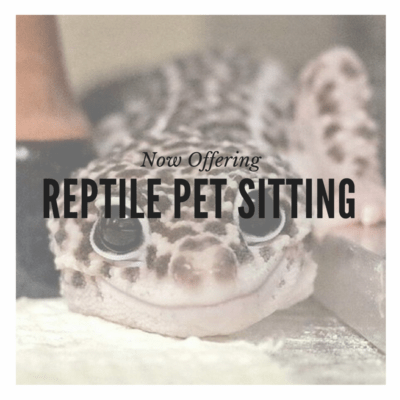 Reptile Pet Sitting BeLoved Pet Sitting San Diego