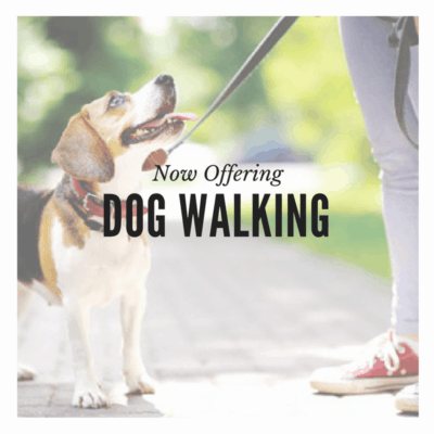 Dog Walking Dog Walkers San Diego Pet Sitting