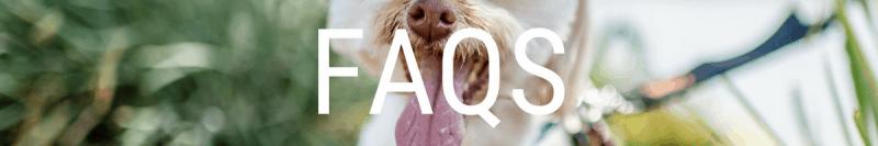 pet sitting FAQ