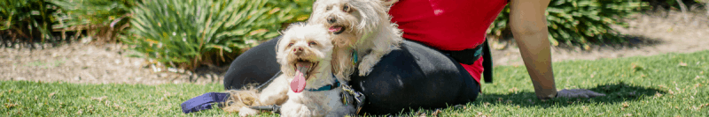 cat or dog pet sitting beloved pet sitting chula vista, dog sitting